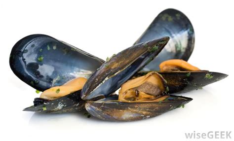 What Is Mussel Farming? (with pictures)
