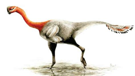 New Dinosaur Named After Decades Of Mistaken Identity